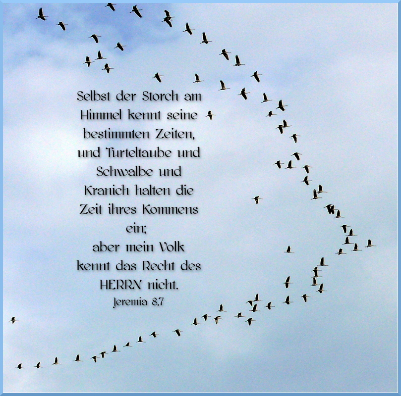 Zugvögel -