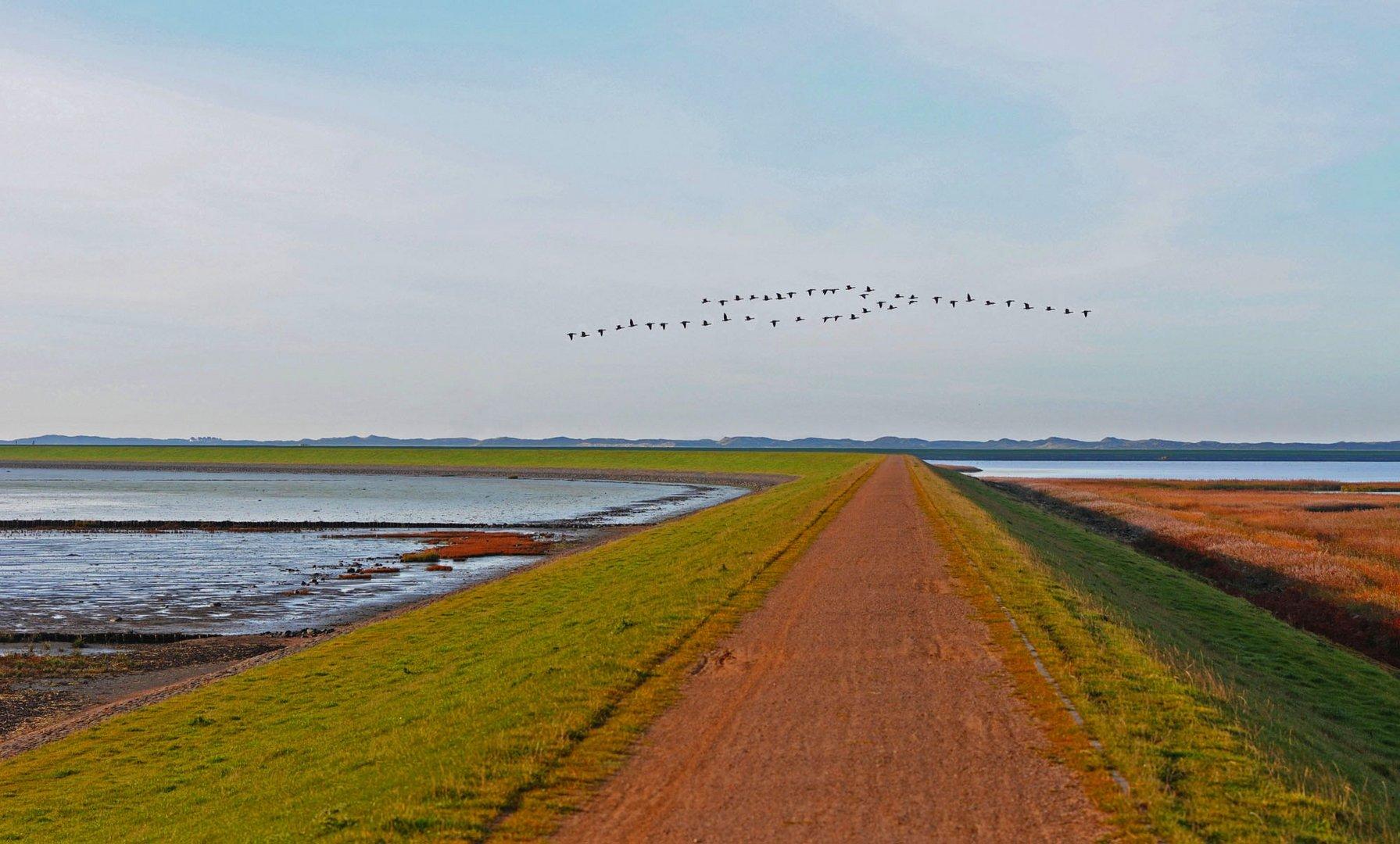 Zugvögel am Rantumbecken/Sylt