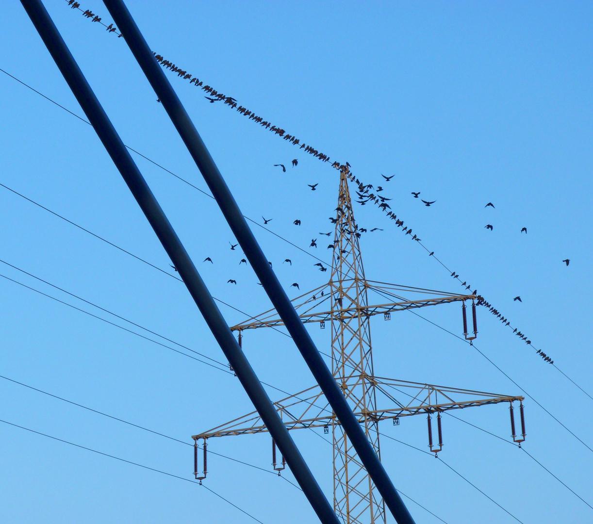 Zugvögel Schlafplatz auf der Energie Trasse