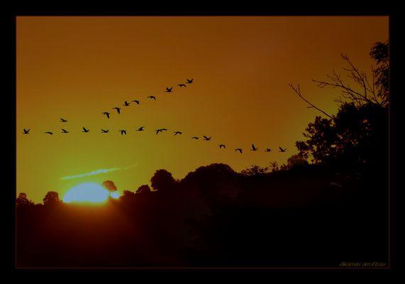 Zugvögel über Polle a.d.Weser