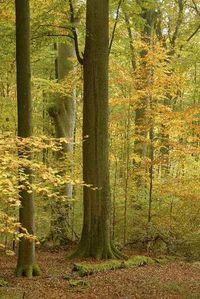 Zukünftiger fränkischer Nationalpark Steigerwald