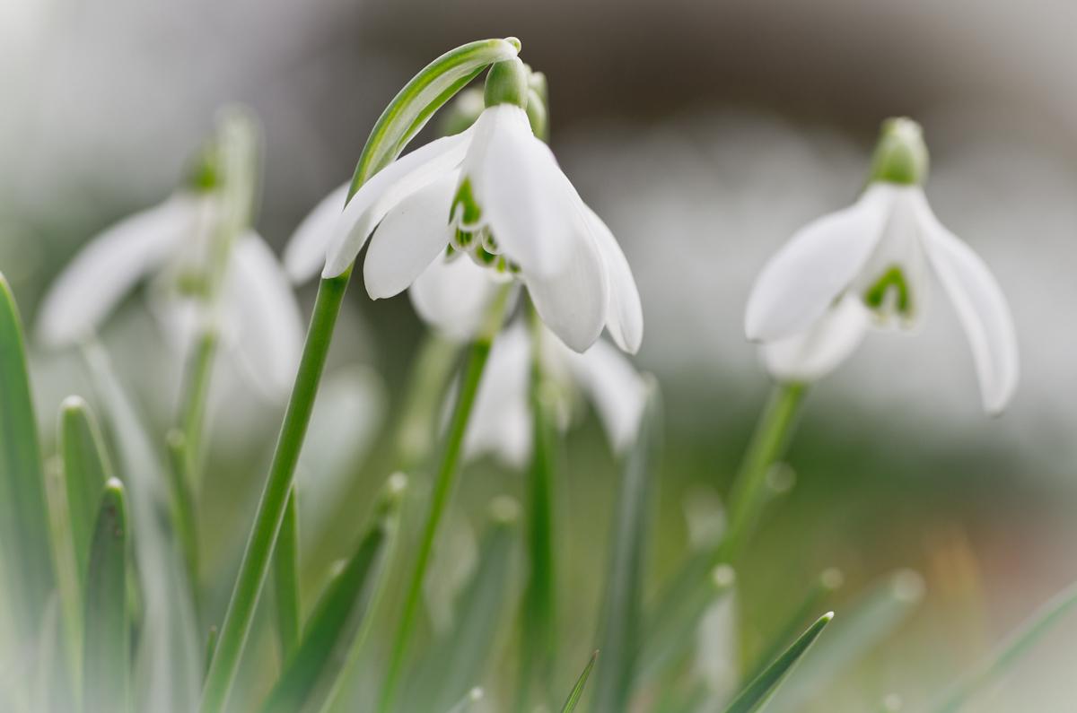 Zum Frühling Blümchen