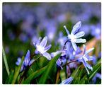 Zum Frühling Farbe bekennen