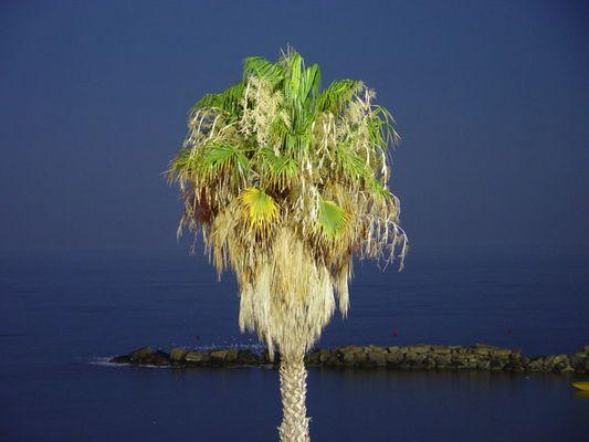 Zum Glück braucht man auf Zypern kein Brennholz!