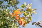 Zum Himmel ragt der Herbst