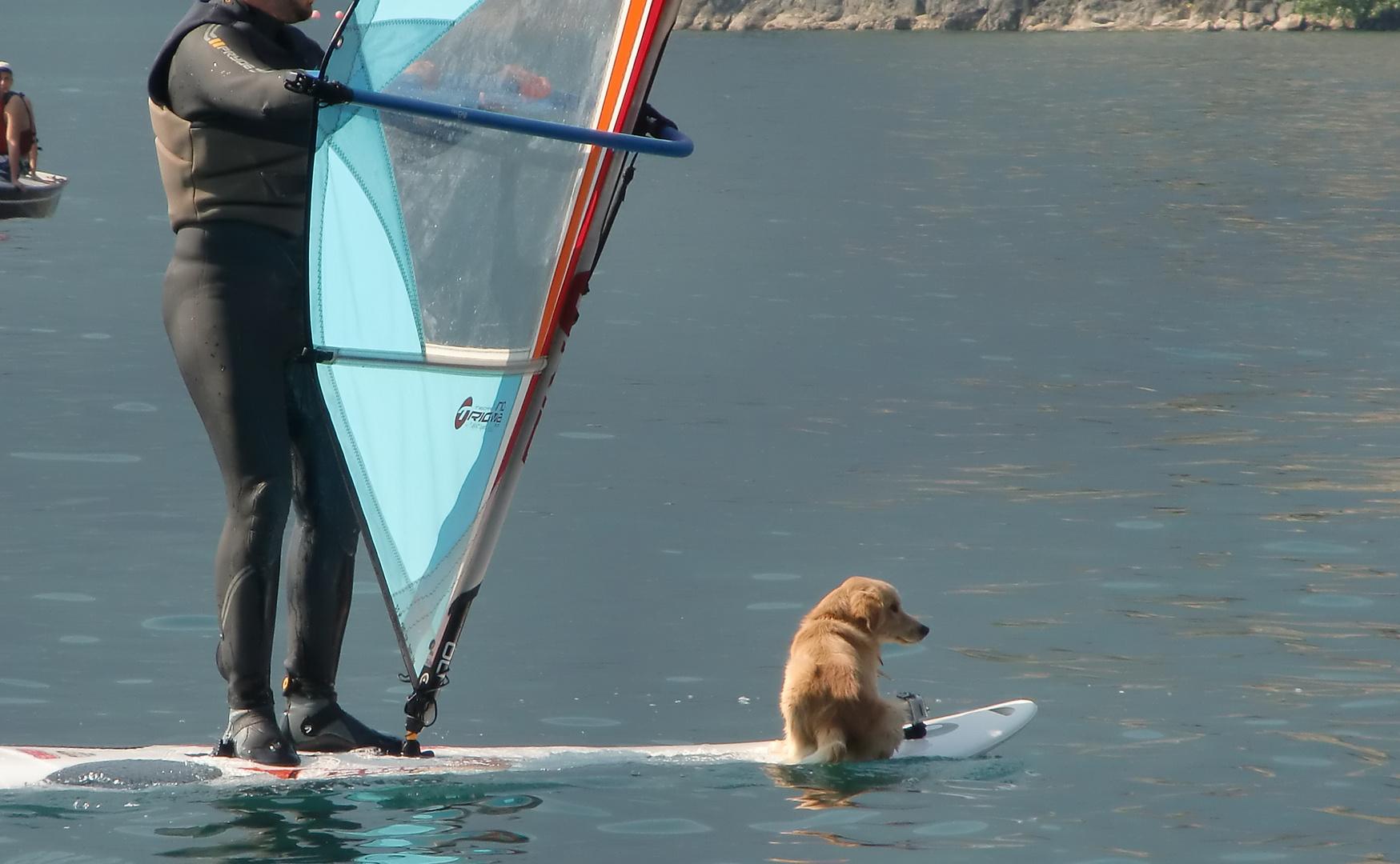 Zum Schmunzeln - Surfpartner am Gardasee gesehen