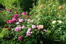Zum Sommeranfang: Rosen aus meinem Garten von Ingeborg K
