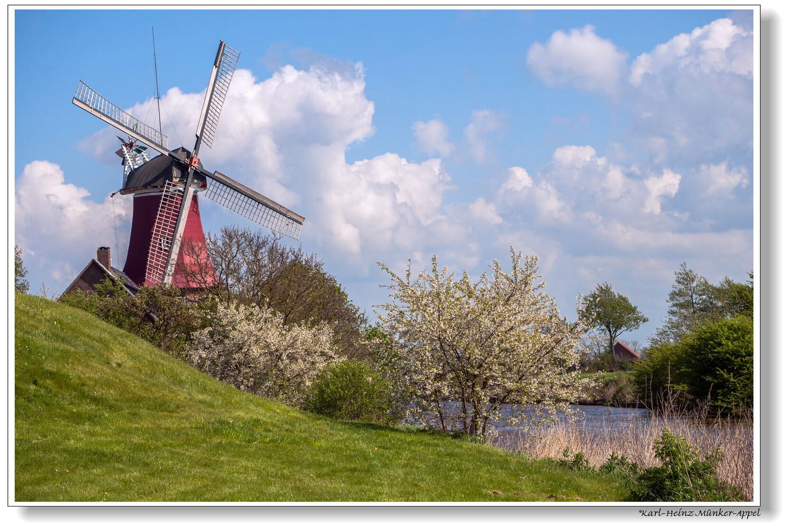 Zum Tag der Mühlen; Mühle in Greetsiel