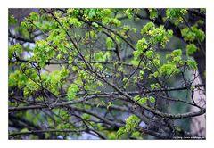 """Zum Thema """"Alles Grün macht der Mai"""""""