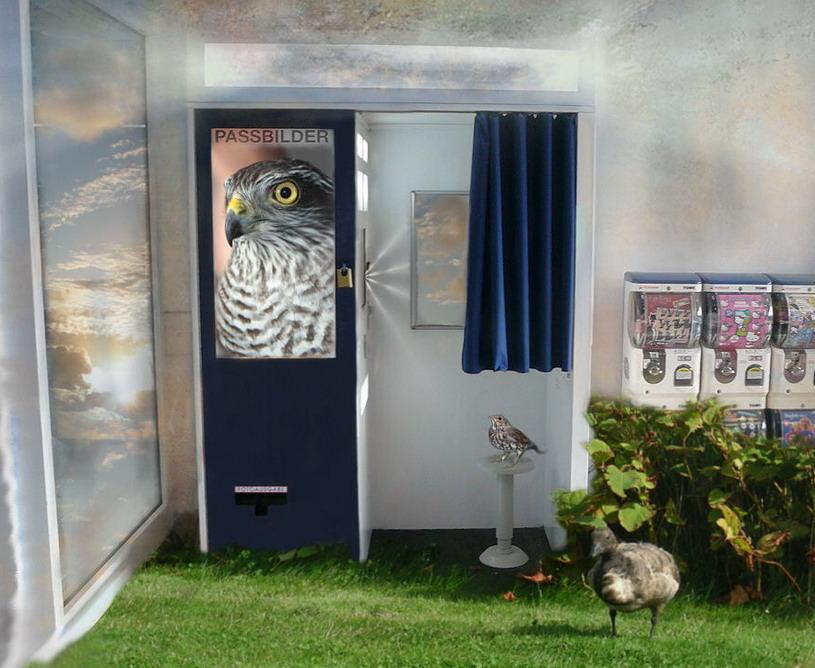 """Zum Thema  -"""" Automaten""""- Und jetzt das Vögelchen...."""