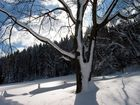 Zum Thema: Bäume im Winterkleid