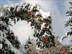 """Zum Thema : """"Bäume im Winterkleid"""""""