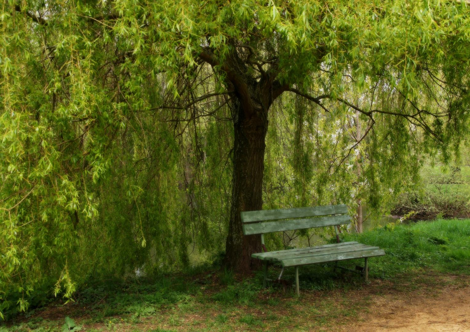 ZUM THEMA: Das grüne Zimmer der Natur