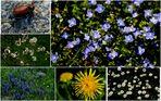 ZUM THEMA : Das grüne Zimmer der Natur