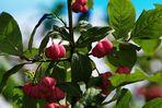 ZUM THEMA: Farben der Natur