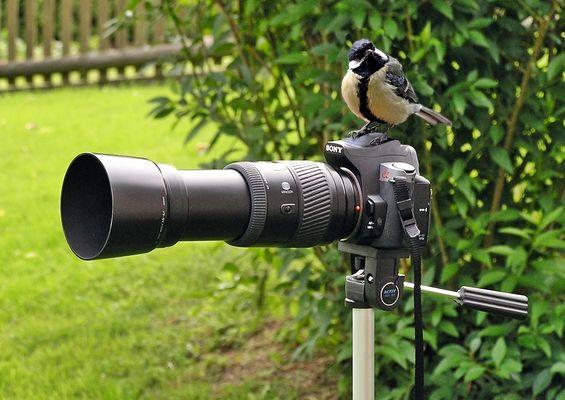 """Zum Thema: """"Fotografen im Einsatz"""""""
