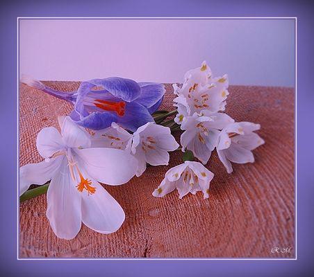 ZUM THEMA: Frühlingserwachen ........ Le printemps s' éveille