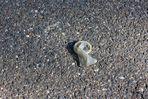 zum Thema Steine