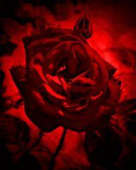 #...Zum Valentinstag......#