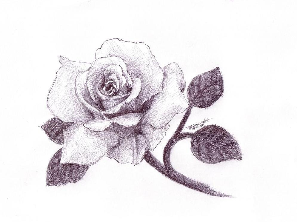 Rosen bleistiftzeichnung  Zum Valentinstag... Foto & Bild | 2d-grafik, zeichnungen, digiart ...