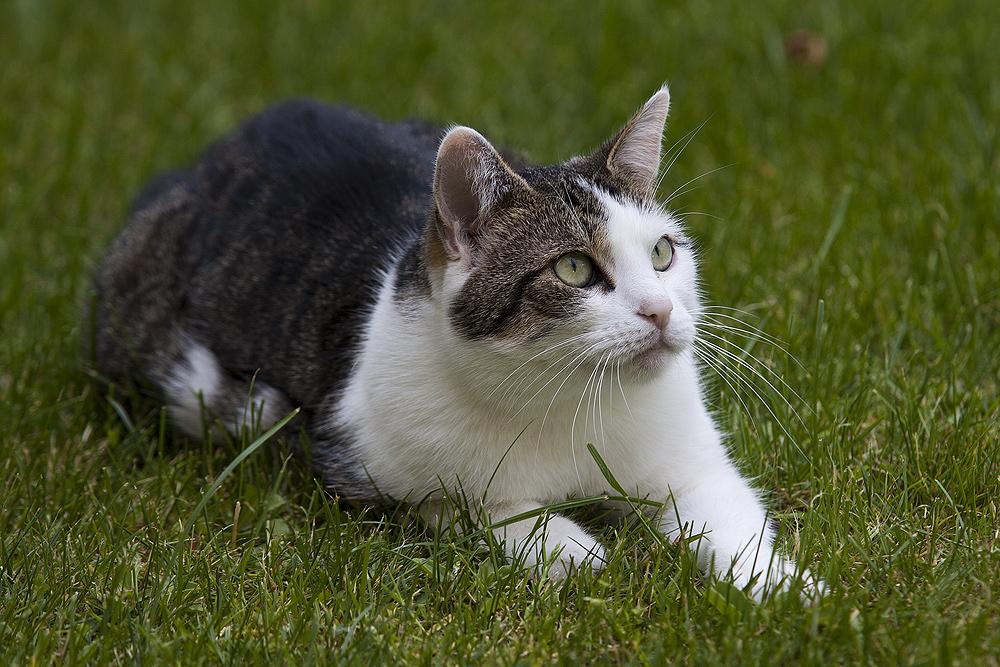 Zum Weltkatzentag - Samy