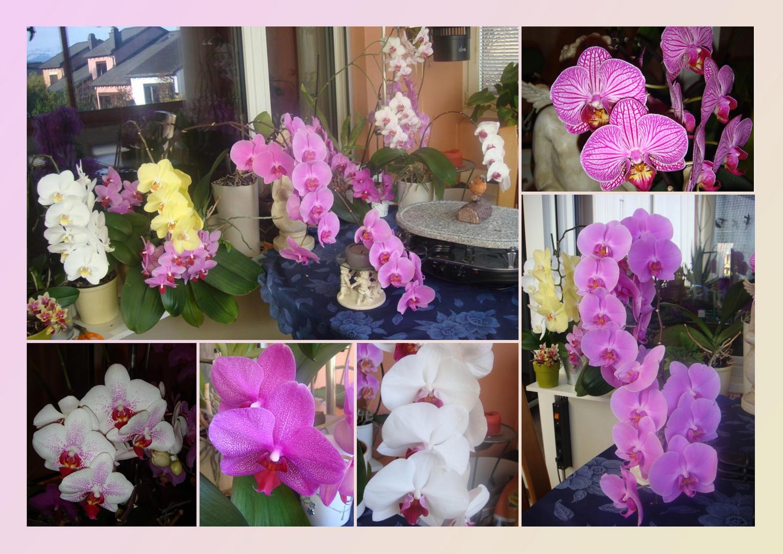 Zum Wochenende lasse ich für Euch meine Blumen sprechen