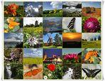 """ZumThema: """"Farben der Natur"""""""