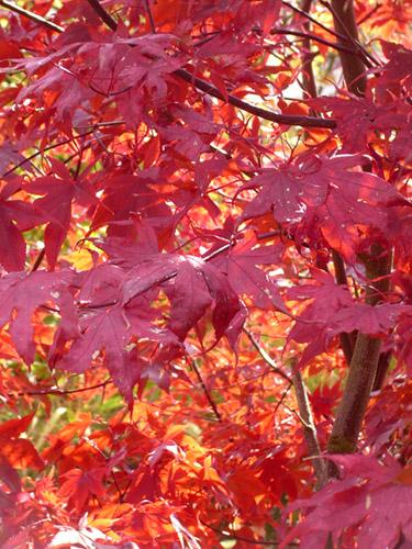 Zur Abwechslung mal Herbst