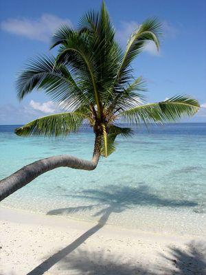 Zurück aus dem Paradies - Malediven Januar 2006