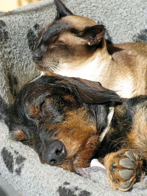 Zusammen schläft sich einfach besser