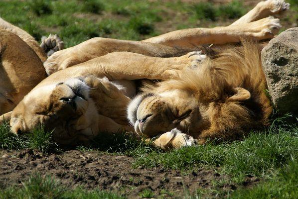 Zusammen schlafen kann so schön sein ...