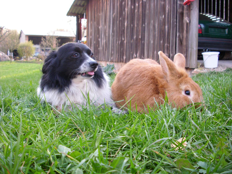 """""""Zusammenleben von Hund und Kanninchen"""""""