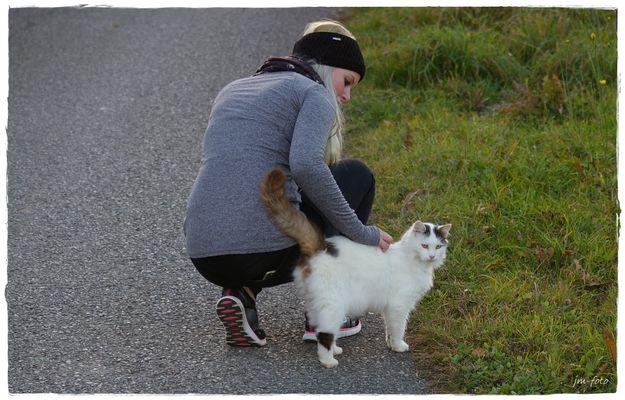 Zutrauliche Katze