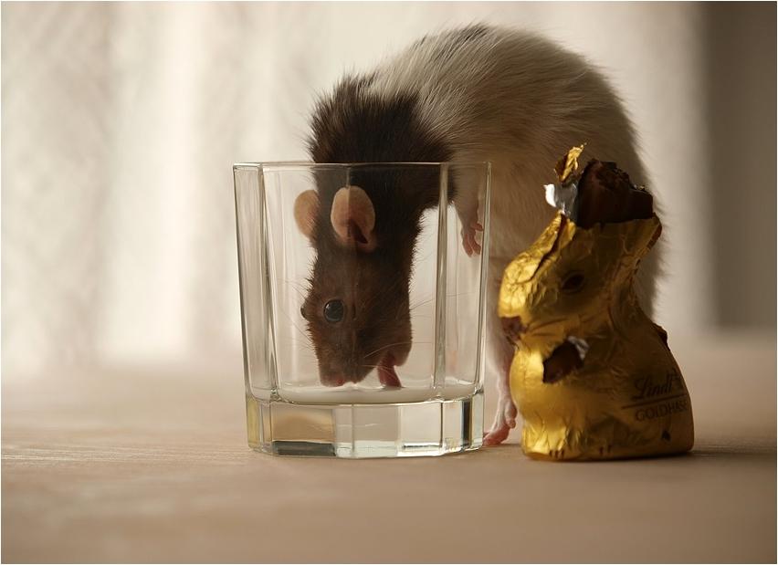 zuviel Schokolade macht durstig....