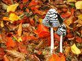 ..kleine Waldzwerge.. von Nadja Ph.