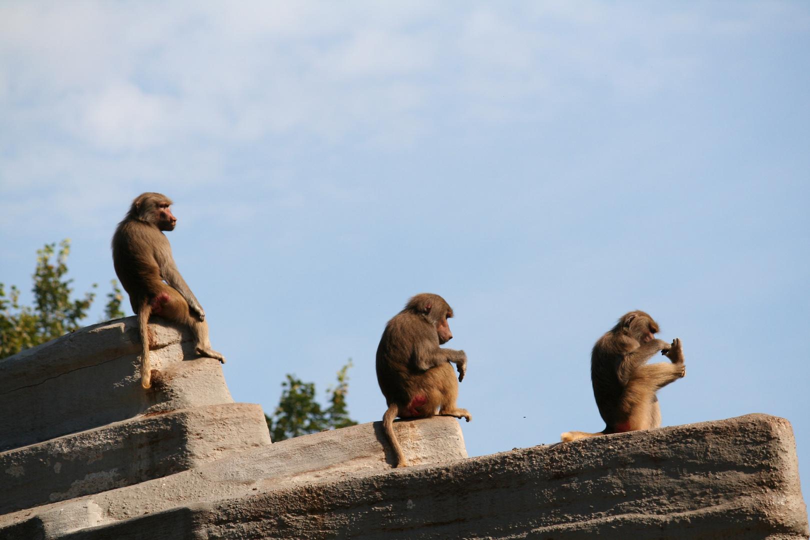 Zwei Affen und ein Kasper