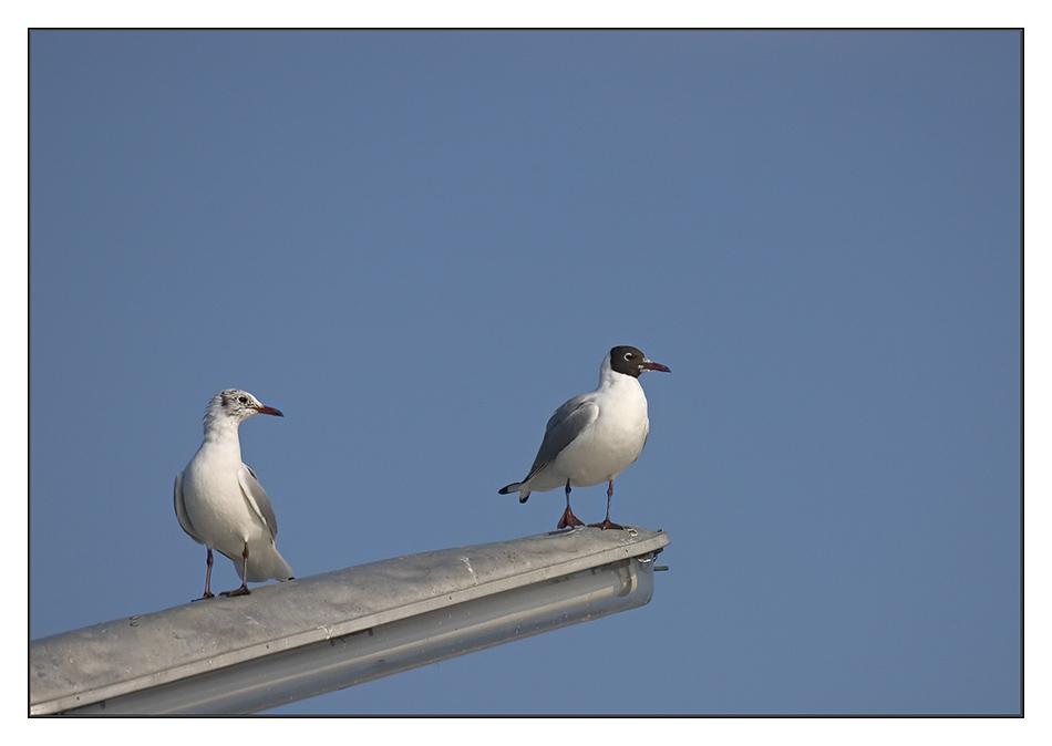 zwei am Mast.......