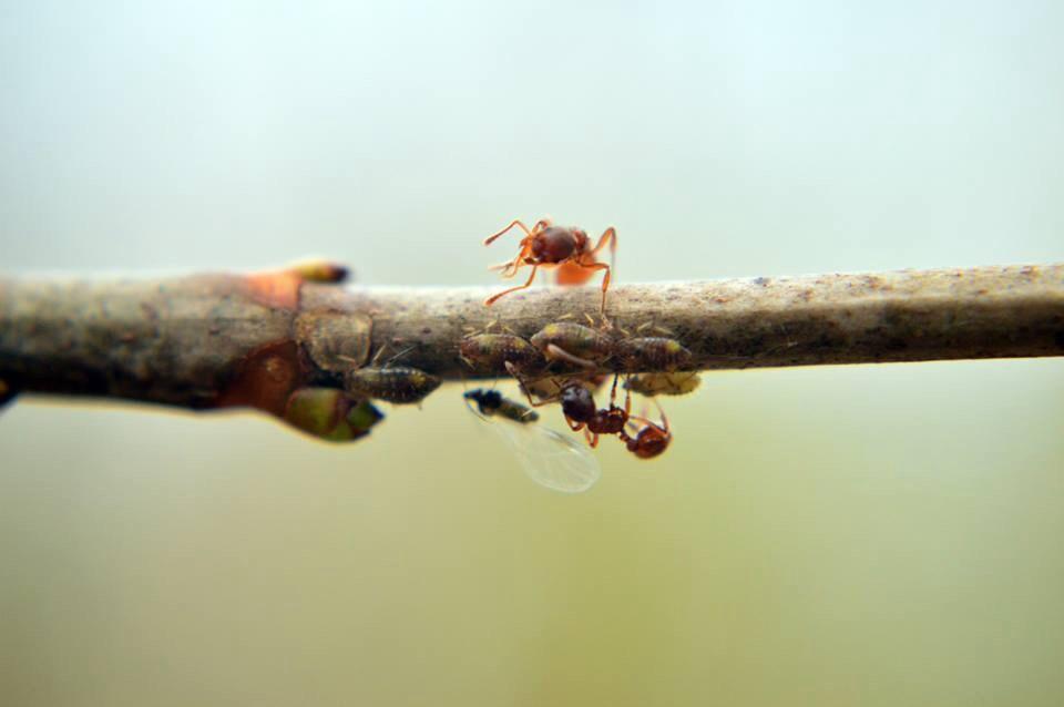 Zwei Ameisen am Ast