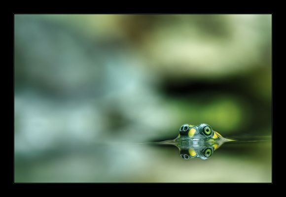 Zwei Augen