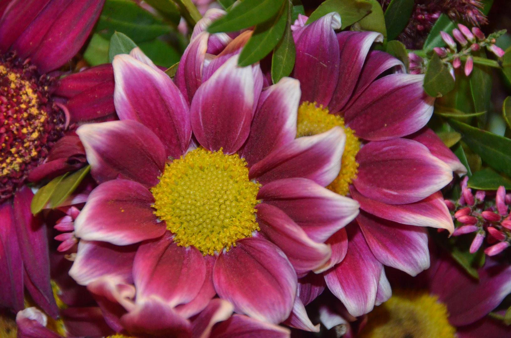 Zwei außergewöhnliche Blüten...