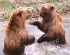 zwei Bärenbrüder