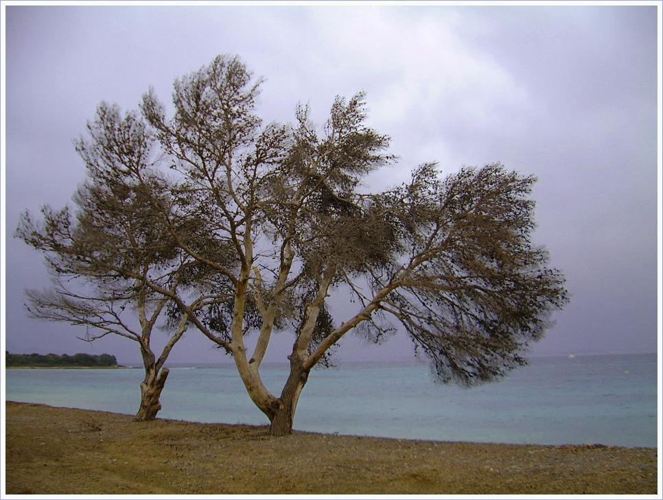 Zwei Bäume am Meer - noch ein Versuch