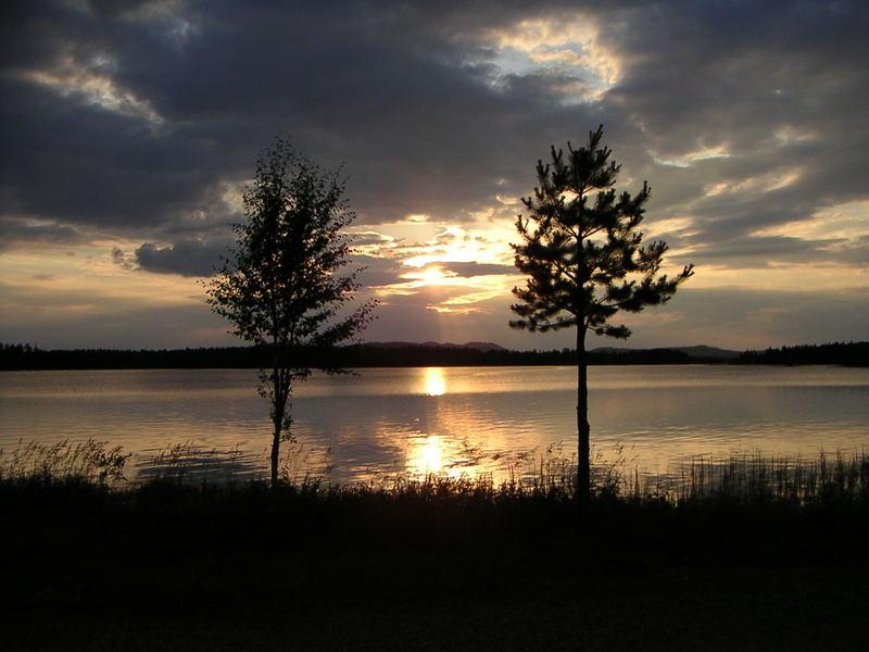 Zwei Bäume bei Sonnenuntergang