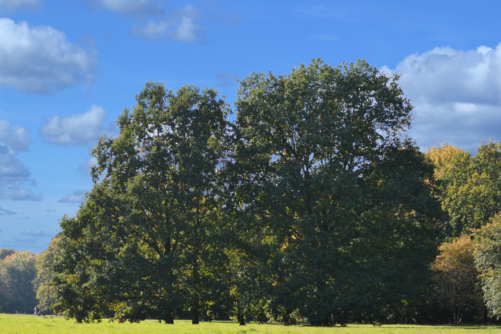 Zwei Bäume im Spätsommer