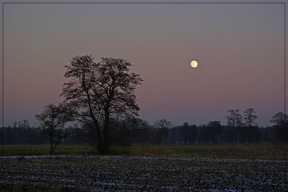 Zwei Bäume und der Mond