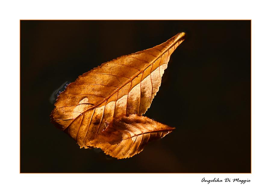 Zwei Blätter