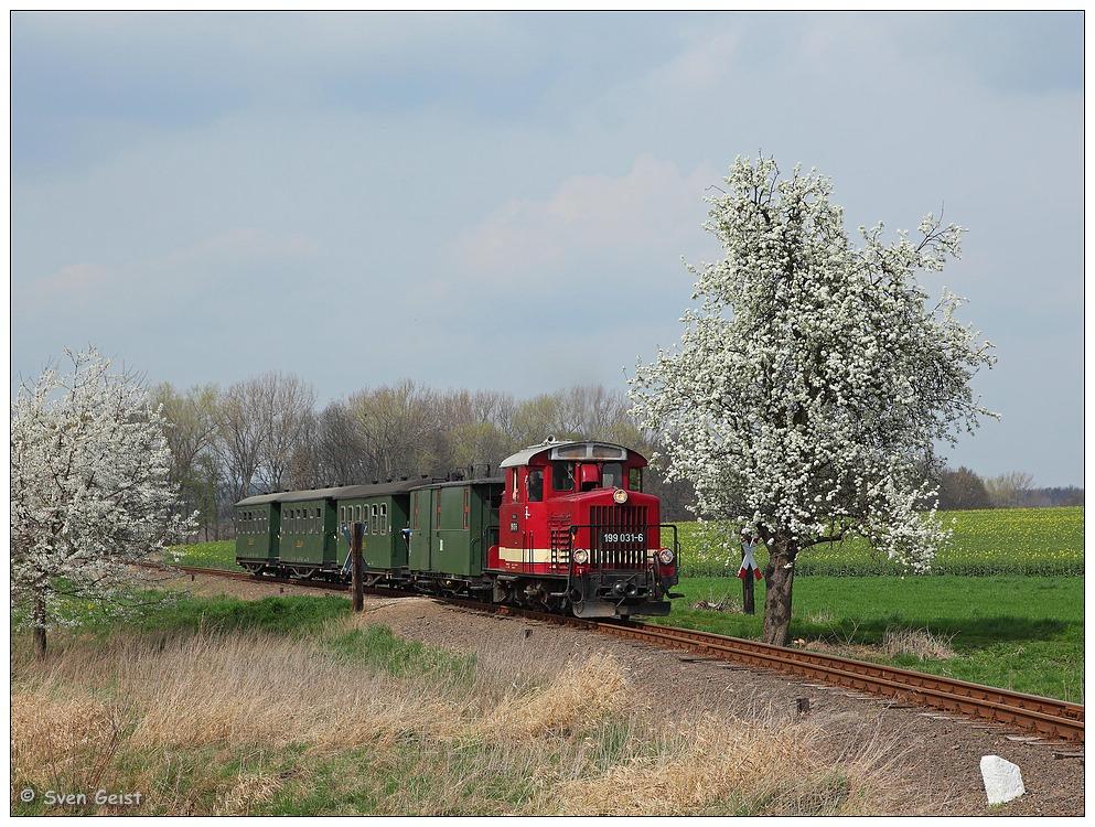 Zwei blühende Bäume am Bahnübergang