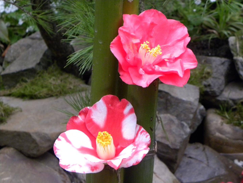 Zwei Blumen wie Schwestern