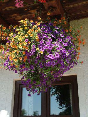 Zwei Blumenfarben