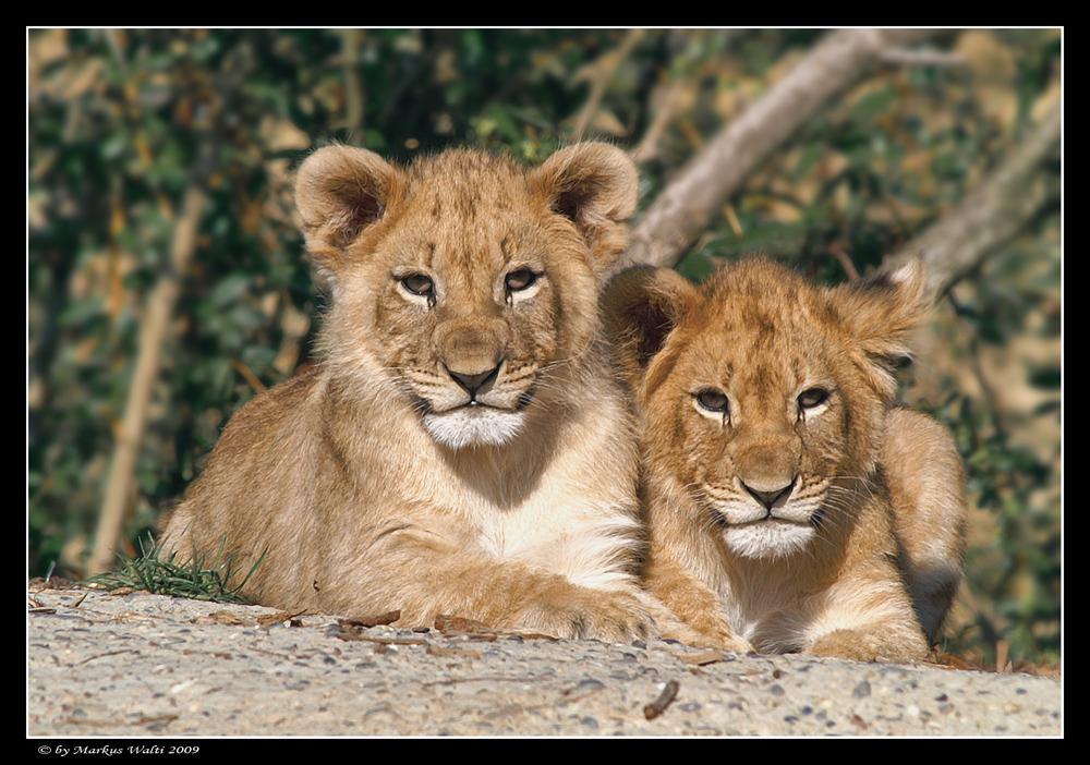 Zwei Brüder